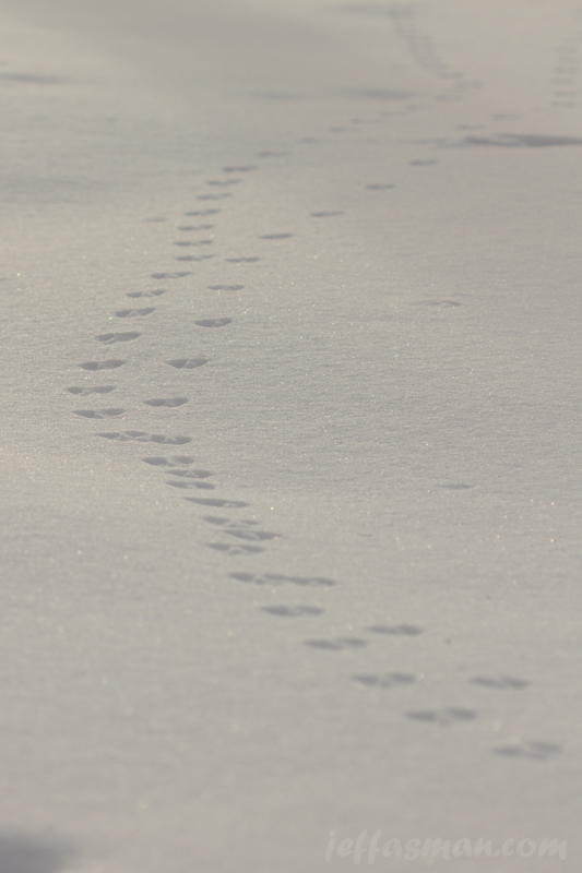 Little critter tracks