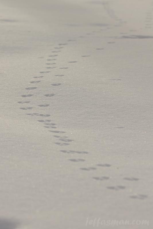 Little critter tracks